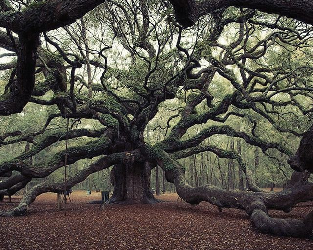 Value and the 100 year old Oak Tree